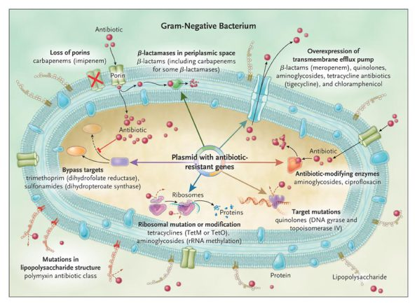 resistenciaantibiotica